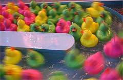 colored_ducks