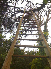 long_ladder