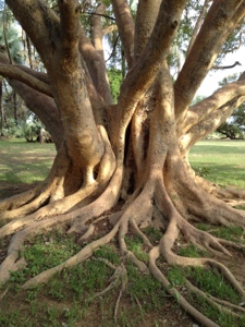 tree_roots_entangled.jpg